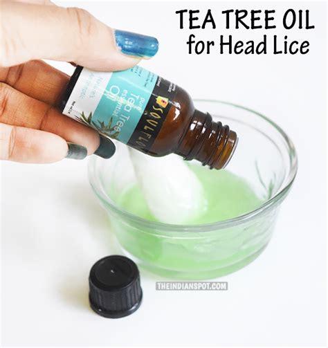 does tea tree oil kill lice head lice treatment home remedy tea tree oil homemade ftempo