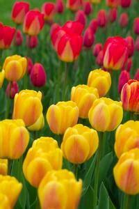 fiori perenni pieno sole un elenco di pieno sole perenni fiori in zona 4