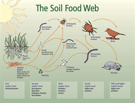 soil food web diagram soil food web nrcs soils