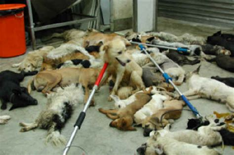 puppy beaten exploitaion cruelty 20 s best friend not for everyone photo