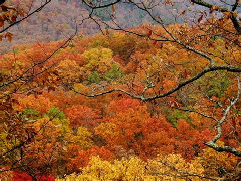 fall colors in virginia see stunning fall foliage at these 14 virginia state parks