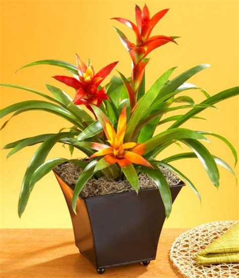 indoor flowering plants no sunlight 17 best flowering houseplants balcony garden web
