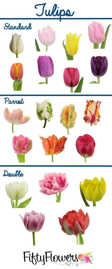colors of tulips fiftyflowers offers a wide variety of types and colors