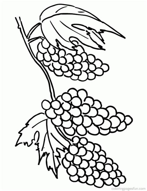 grapes coloring pages to print grapes pictures coloring home