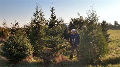 christmas tree farm in chicagoland area finding a fresh cut tree all about tradition chronicle media