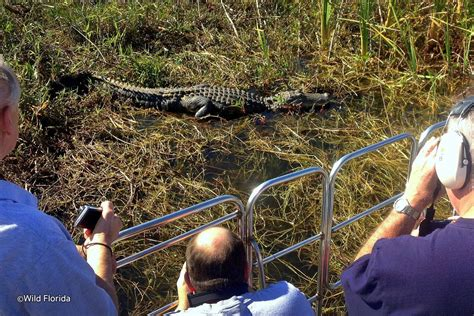 airboat wild florida wild florida airboats and gator park airboat tours and