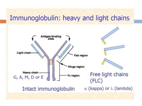 what is kappa light chain myeloma nephron power monoclonal gammopathy and end organ damage