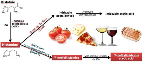 alimenti vasodilatatori intolleranza all istamina hit nutrifun