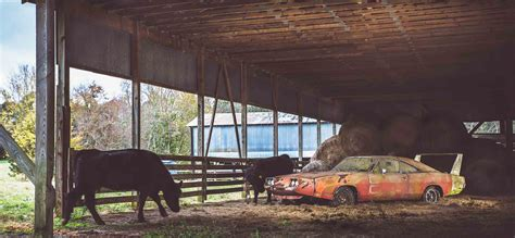 Www Find 1969 Dodge Daytona Charger Barn Find Alabama Photos