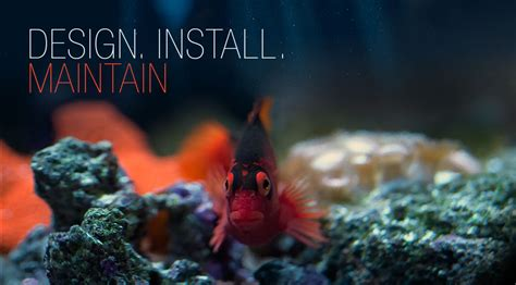 aquarium design austin tx capital aquariums custom aquariums maintenance in