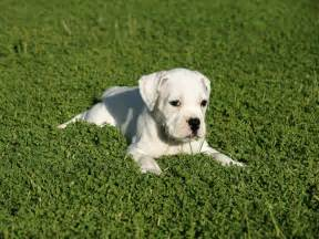 Working puppies pictures information