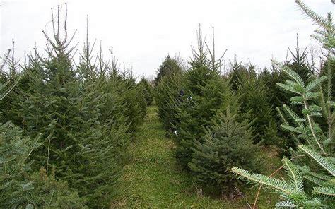 consider an iowa grown christmas tree morning ag clips