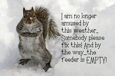 cold weather funny on pinterest cold weather quotes quote winter snow cold weather
