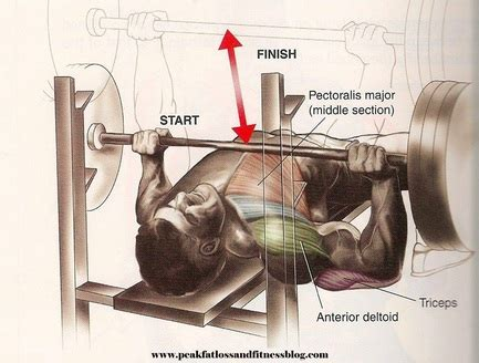 muscles worked by bench press flat barbell bench press peak fat loss and fitness