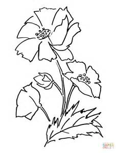 coloring page of a poppy flower poppy flower coloring page free printable coloring pages