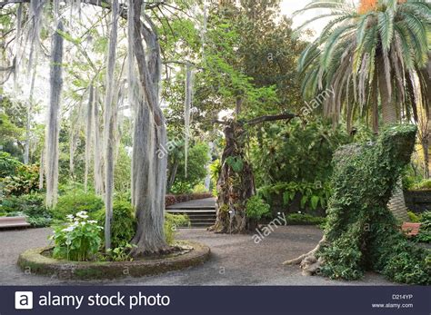 Botanical Gardens Tenerife Botanical Gardens Tenerife Tenerife Botanic Garden Botanical Garden Photography Top Places To