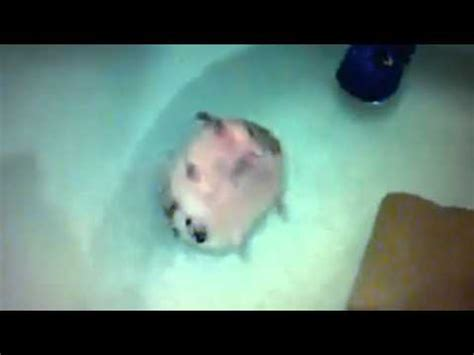 bathtub boogie boogie boogie hedgehog in a bathtub youtube