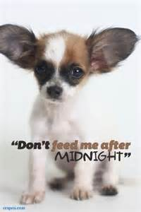 Adorable puppy caption quot don t feed me quot central california spca