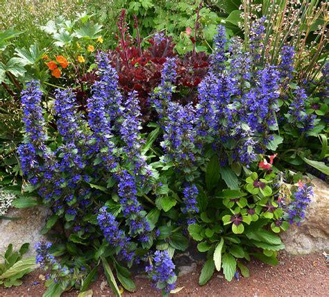 denver garden centers