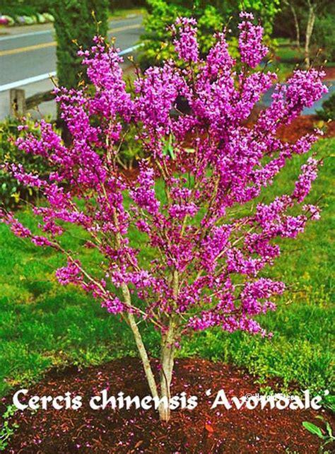 trees  shrubsaesculus berberis betula calluna