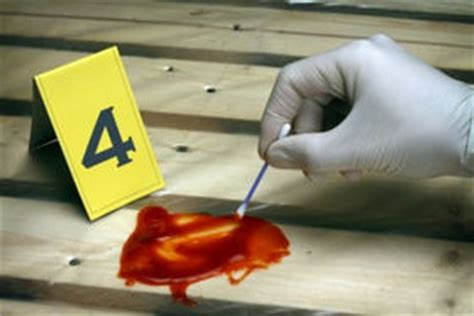 all investigator jobs: overview of crime scene