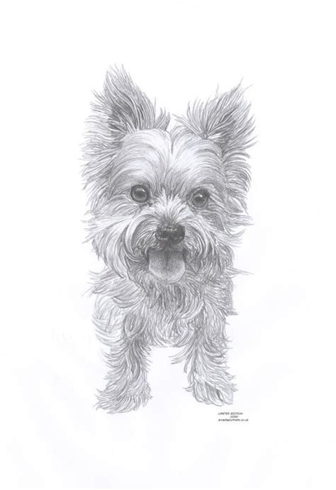 yorkie  dog limited edition art drawing print signed