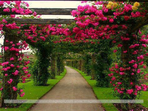 Images Of Flowers Garden Beautiful Flower Garden Wallpapers Wallpapersafari