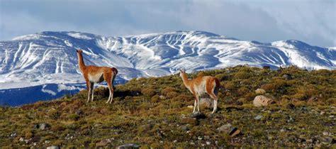 imagenes de otoño en la patagonia desertos frios das am 233 ricas mojave grande bacia e