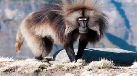 anjing terganas gambar binatang mematikan dunia babesajabu singa gambar