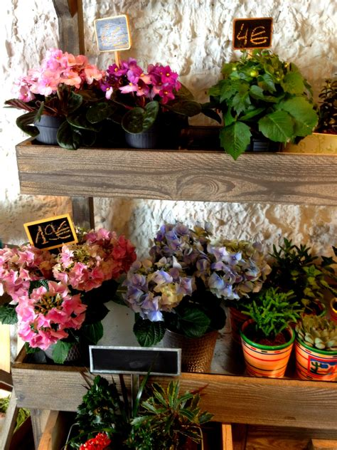 french fashion  trends plants flowers   paris
