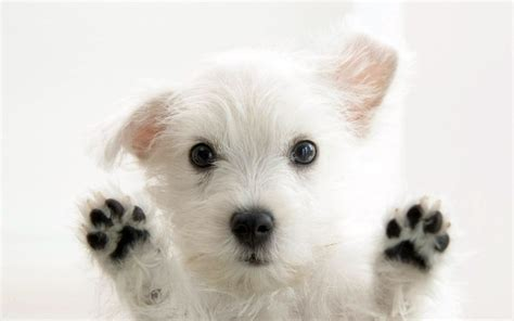 cute puppy dog wallpapers download best beautiful wallpaper cute dog baby dog hd