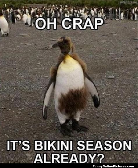 Waxing Meme - penguin bikini