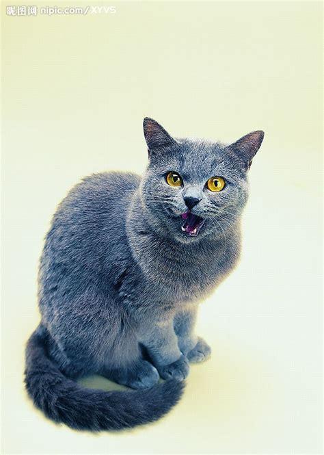 Blee Cat 2 可爱之猫摄影图 家禽家畜 生物世界 摄影图库 昵图网nipic