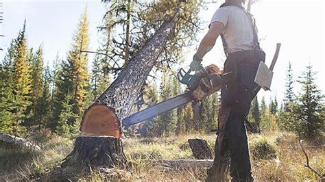where to drop tree mj 618 348 how to drop a tree muvee