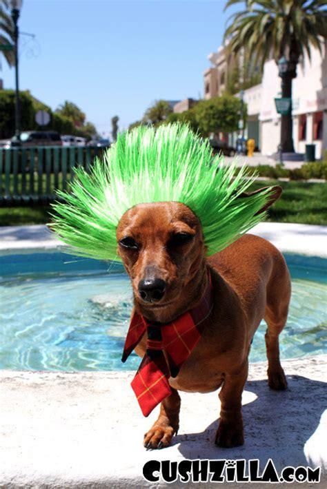 spiky hair dogs dog wig cat wig cushzilla nihilistic neon green punk wig