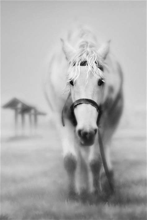 wallpaper for iphone horse ghostly horse animal iphone wallpapers iphone 5 s 4 s