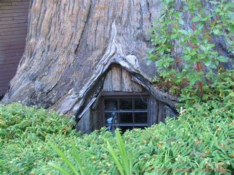 tree house buy famous redwood tree house buy redwood