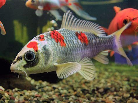 What Does Sconce Mean Fish Pond Feeder Wie Sind Fische Zu Ernhren Info Durch
