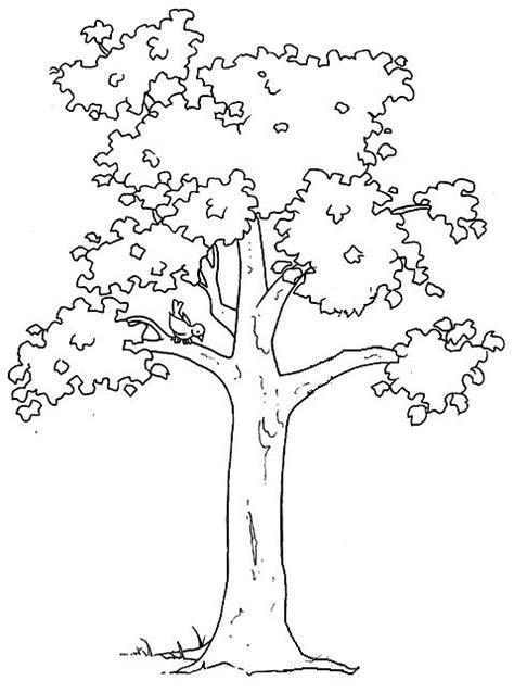 coloring pages ginkgo tree 17 migliori idee su disegni di fiori su pinterest