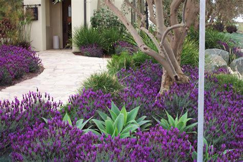 Torrey Pines Landscape Company Drought Tolerant Lavender Garden Ideas