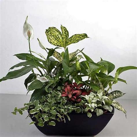 indoor plant arrangements mixed indoor plants in basket arrangement houseplants