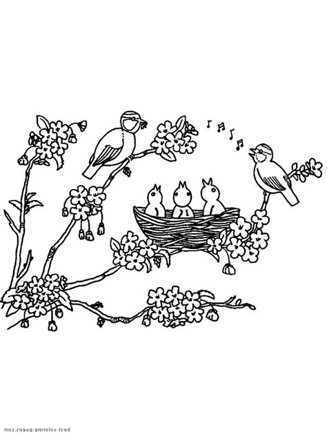 bird nest eggs coloring page free bird nest with eggs coloring pages