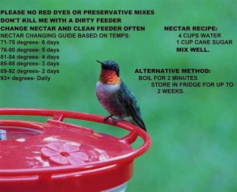when to change hummingbird nectar humming bird nectar