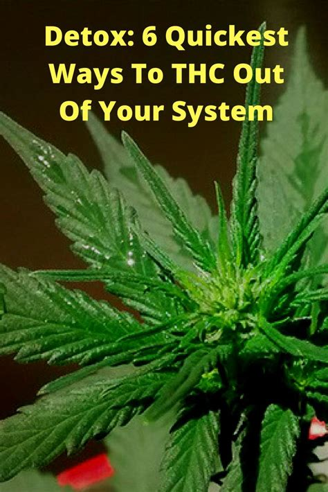 Detox To Get Out Of System by Detox 6 Ways To Thc Out Of Your System Detox