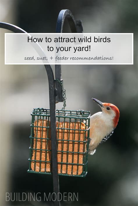how to attract wildlife to your backyard building modern a modern diy renovation blog