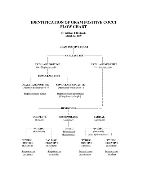 gram positive bacilli flowchart gram negative bacilli flowchart identification of gram