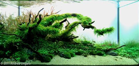 Planted Tank The shelter by Andrea Ongaro   Aquarium
