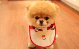 Cute little dog wallpaper cute little dog