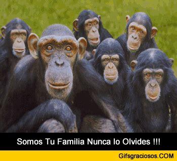 im 193 genes de monos chistosos con frases 64 im 225 genes de memes muy divertidos para whatsapp