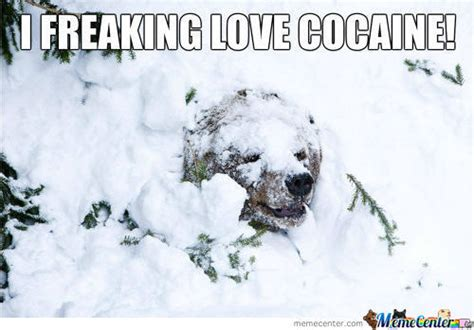 Coke Bear Meme - bear snow memes best collection of funny bear snow pictures